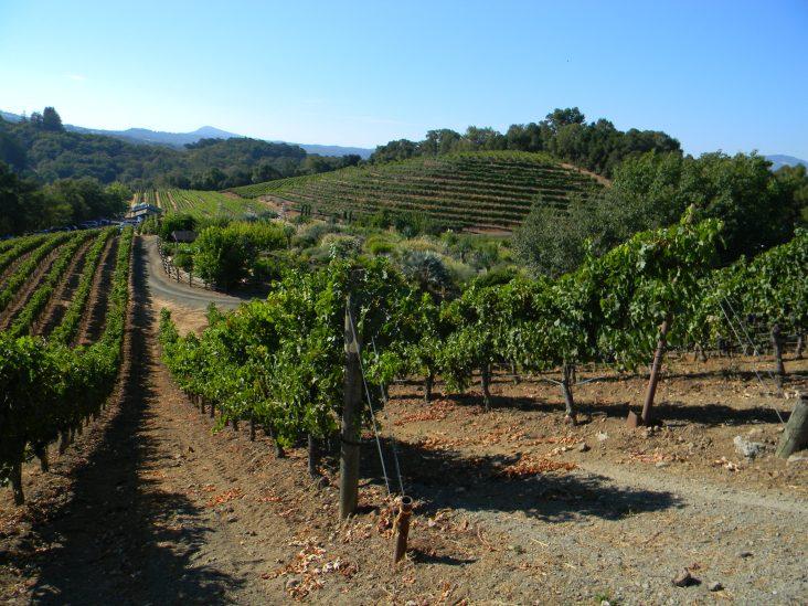 california vineyards 2014 122